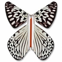 Fluture Zburator Leuconoe