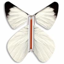 Fluture Zburator Pieride