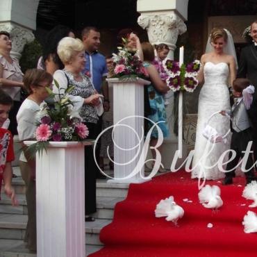 Porumbei albi nunta, voiajori si rotari