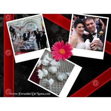 Organizari Nunta Costanta